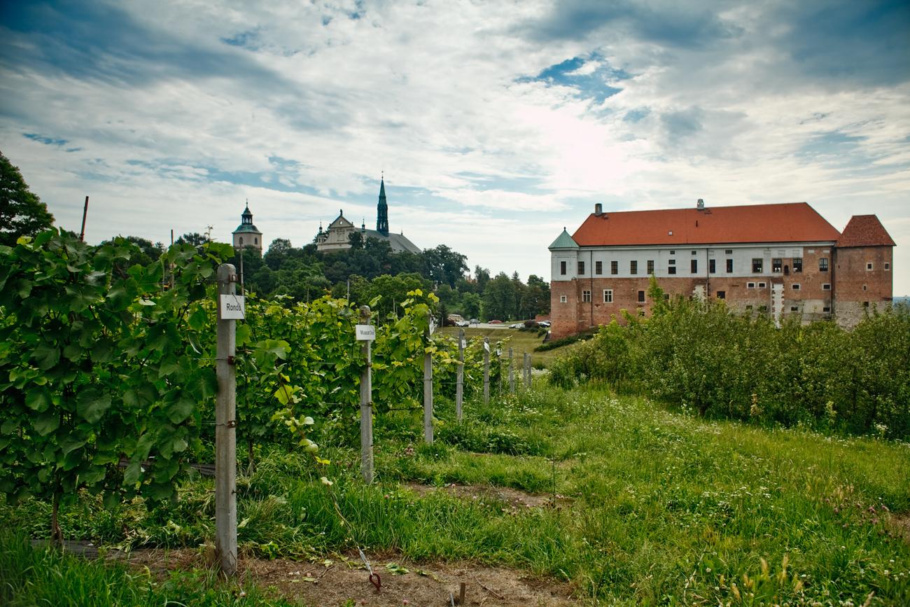 Winnica św. Jakuba – Dominikanie Sandomierz